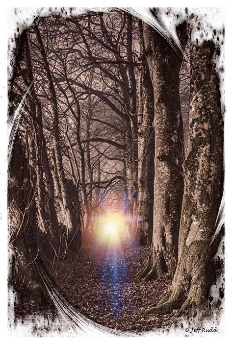Woods light wm